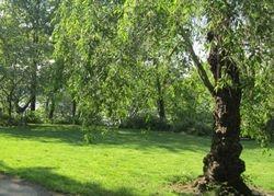 Abbey's Lawn