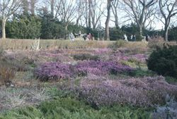 The Heather Garden