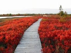 La première passerelle sur la plaine l'automne