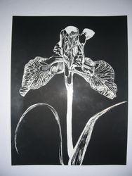 The Botanicals- Iris (Hope)