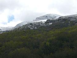 Iribio nevado