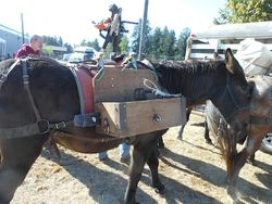 Mule Packing Demo at WA Horse Expo