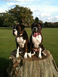 Betty&Edie surveying their kingdom