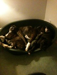 There was 3 in the bed .........