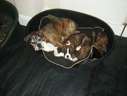 3 in the bed and the little 1 said........