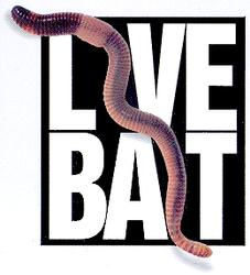 Live Bait - year round