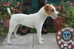 Class 5. Dog Pup (6-12 months) 12.5 - 15 ins