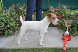 Class 9. Bitch Pup (6-12 months) 10-12.5 ins