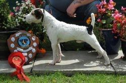 Class 1. 10-12½? Dog Puppy (6-12 months)
