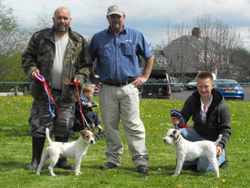 Champion Jack Russell Puppy (left) and Reserve