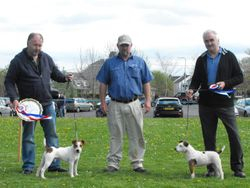 Best Over Jack Russell (left) and Reserve