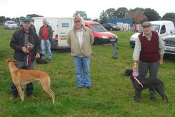 Champion Lurcher & Reserve.