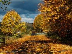 A Leafy Walk