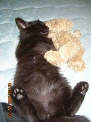 Jetter W/Teddy