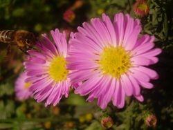 In nato bog ustvari cvetlice vseh barv