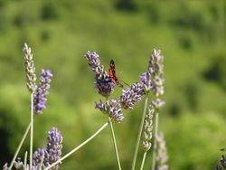 Sladki nektar