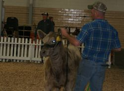 Showing Lisa at the Ky Beef Expo