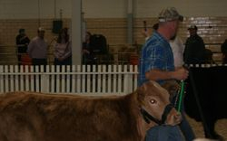 Showing Uno at the Beef Expo