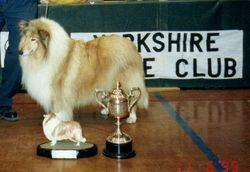 Ch & UK Ch Kynan Fait Accompli 1995