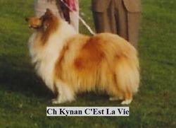 Ch Kynan C'Est La Vie