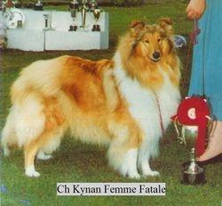 Ch Kynan Femme Fatale