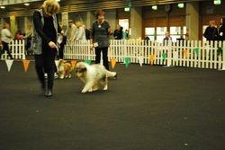 Best Baby Puppy in Show