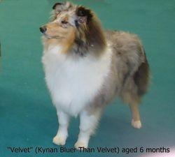 Velvet aged 6 months