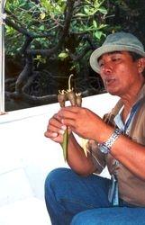 Benih pokok bakau