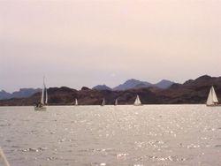 Boats in the Race at Lake Havasu