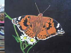 Buterfly and daisies