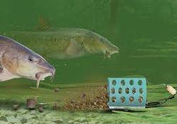 Barbel pellet feeder