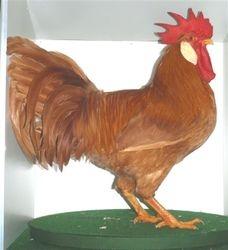 Best Buff/Best Cock Bird in Show