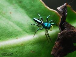 Blue spider (2009)