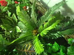Small Cycad & Groundcover