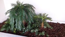Palm Atrium