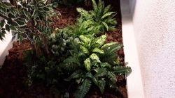 Tree Atrium with Groundcover plants
