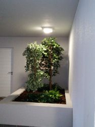 Tree Atrium