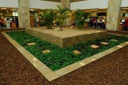 Pebbles,Bark & plant