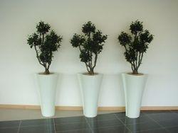 Pot Atrium