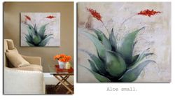 Aloe Small