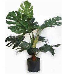 Plant medium Split Philo Plant