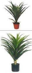Plant medium Yucca Heads