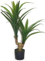 Plant medium Yucca Head Double Small