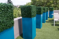 Outdoor Square Hedge