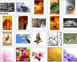 Abstarct Photos Africa & Flowers
