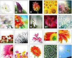 Abstarct Photos Flowers