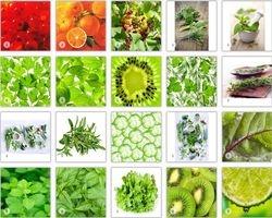 Fruit & Green