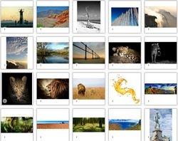 Landscapes & Animals Wild