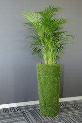 A Cone Artificial grass