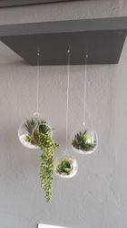 Glass Balls & Succulents